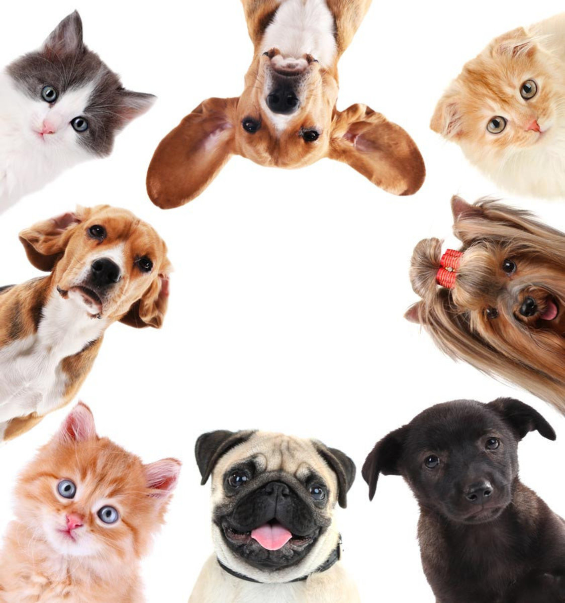 Pet Selfie Wall Mural