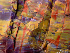 Petrified Wood, Arizona Wallpaper Mural