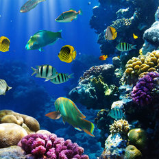 Tropical Fish On A Coral Reef  Mural Wallpaper