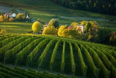 Piemonte Vineyard Mural Wallpaper
