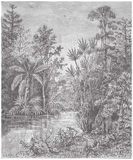 Plant Landscape Of The Cretaceous Period Wall Mural