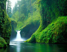 Punchbowl Falls Mural Wallpaper