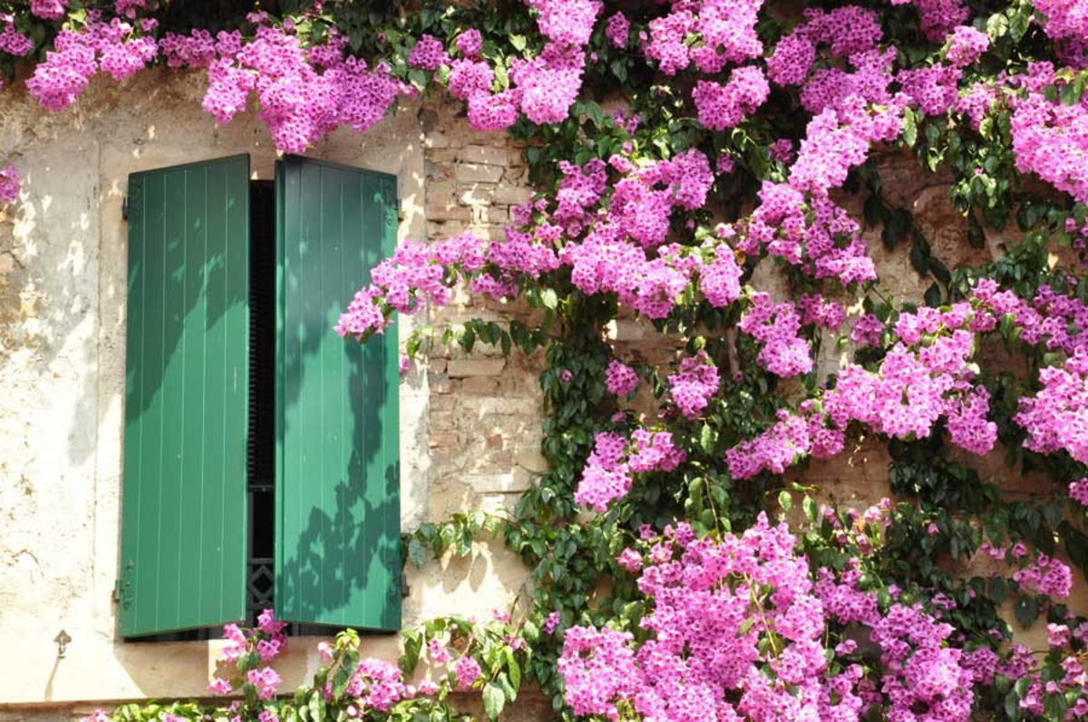 Flowers On The Facade Wall Mural