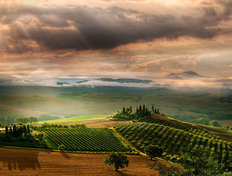 Quiet Tuscan Sunrise Wall Mural