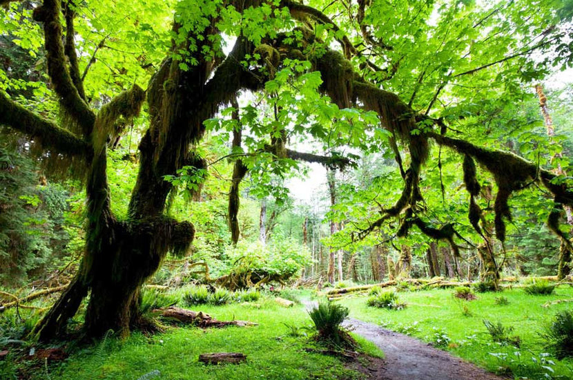 Branches of a tree in a rainforest stretch out in this lovely image