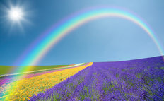 Rainbow Flower Field Wall Mural