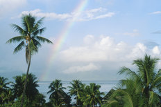 Rainbow And Palm Trees Mural Wallpaper