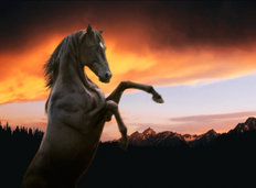Rearing Stallion And Grand Tetons Mural Wallpaper