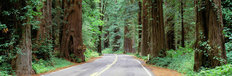 Redwood Highway  Mural Wallpaper