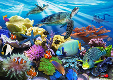 Reef Life Wallpaper Mural