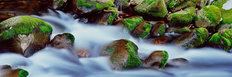 Roaring Fork Cascade, Smoky Mountains Mural Wallpaper