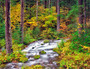 Roaring River with fall colors. Taken from Auferdeide National scenic byway, Oregon