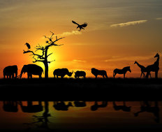 Safari Sunset Mural Wallpaper