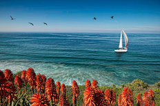 Sailboat in La Jolla Wallpaper Mural
