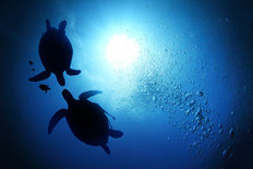Sea Turtle Depths Wallpaper Mural