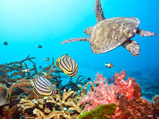 Sea Turtle Swim Wall Mural