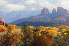 Sedona Foliage Wallpaper Mural