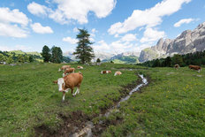 Sella Pass - Italian Dolomites and Countryside Wallpaper Mural