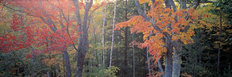 Shades of Autumn Wall Mural