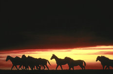 Shadow Horses Mural Wallpaper