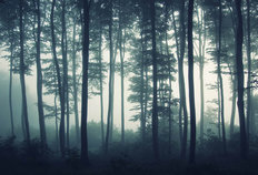 Foggy Forest Light Wallpaper Mural