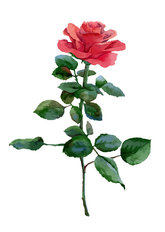 Single Rose Watercolor Wall Mural