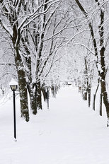 Snow Covered Lane Wallpaper Mural