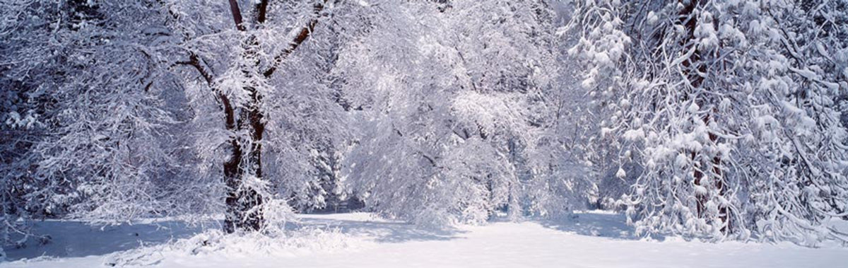 Snow Covered Trees In Yosemite Wall Mural