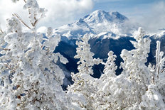 Snow Covered Trees And Mount Rainier Wallpaper Mural