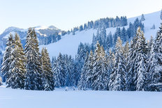 Snowy Alpine Trees Wall Mural