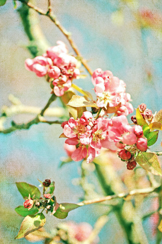 Spring Blossoms (Longenecker) Mural Wallpaper