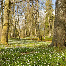 Spring Forest in Sweden Wallpaper Mural