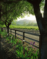 Spring In The Vineyard - Vertical Wallpaper Mural