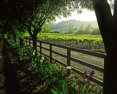 Springtime In The Vineyard Mural Wallpaper