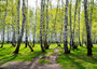 Springtime Trees Wall Mural