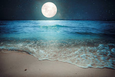 Starry Night Over Tropical Beach Wall Mural