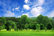 Young Green Forest Mural Wallpaper