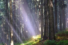 Sunlight Shining Through Trees Wallpaper Mural