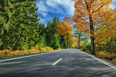 Sunny Autumn Road Wall Mural