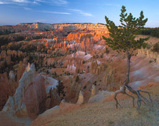 Sunrise Point, Bryce Canyon National Park, UT Wallpaper Mural