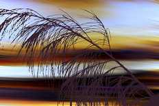 Sunset Breeze 2 Wall Mural