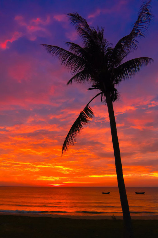Brilliant Palm Tree Sunset Wall Mural