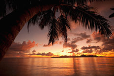 Sunset With Palm Tree Mural Wallpaper