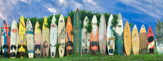 Surfboard Fence Wall Mural