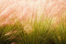 Tall Grasses Mural Wallpaper