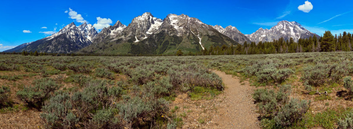 Teton Path Wallpaper Mural