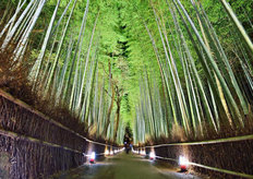 The Bamboo Forest Of Kyoto Wallpaper Mural