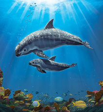 The Endangered Vaquita Wall Mural