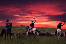 Cowboys Driving A Herd Into The Sunset Wall Mural