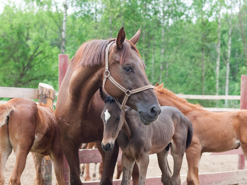A Mother's Love For Her Foals